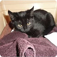 Adopt A Pet :: Spirit - Phoenix, AZ