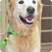 Adopt A Pet :: Wilbur - Foster, RI