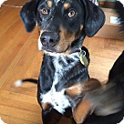 Adopt A Pet :: Ryder is in New England