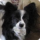 Adopt A Pet :: Artie (in Virginia)