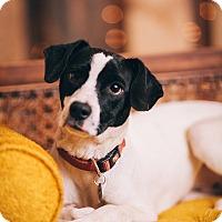 Adopt A Pet :: Gatsby - Portland, OR