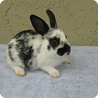 Adopt A Pet :: Korky - Bonita, CA