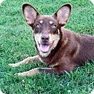 Adopt A Pet :: NADINE