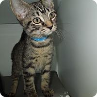 Adopt A Pet :: Fred - Medina, OH
