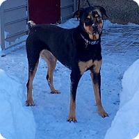 Adopt A Pet :: Bella - Frederick, PA