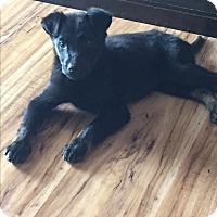 Adopt A Pet :: Simba - New Oxford, PA