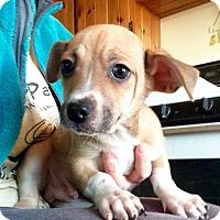 Adopt A Pet :: Franklin - Joliet, IL