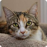 Adopt A Pet :: Mattie - Sacramento, CA