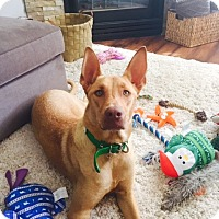 Adopt A Pet :: Maya - Adoption Pending - Vancouver, BC
