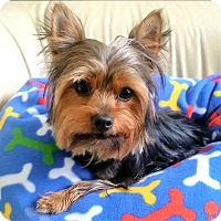 Adopt A Pet :: Charlie - Whiting, NJ
