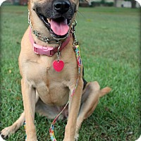 German Shepherd Dog/Labrador Retriever Mix Dog for adoption in Macon, Georgia - Athena