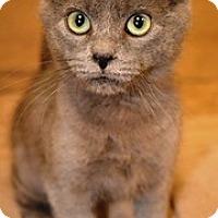 Adopt A Pet :: Charles Marcus - Lebanon, PA