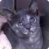 Adopt A Pet :: Carley - Key Largo, FL