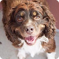 Adopt A Pet :: Jackson - DFW, TX
