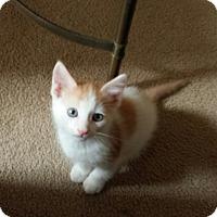 Adopt A Pet :: TUK - Mesa, AZ