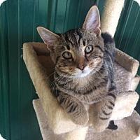 Adopt A Pet :: Snuggles - Transfer, PA