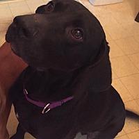 Adopt A Pet :: Lucky - Jetersville, VA