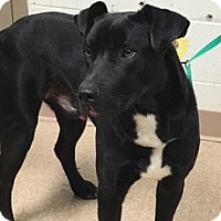 Adopt A Pet :: Harper - Saginaw, MI