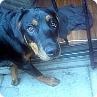 Adopt A Pet :: Hope - Surrey, BC