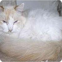 Adopt A Pet :: McGee - Davis, CA