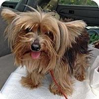 Adopt A Pet :: Tillie - The Village, FL