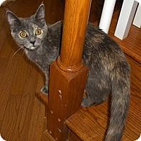Adopt A Pet :: China - Richmond, VA
