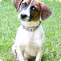 Adopt A Pet :: Benny - Mocksville, NC
