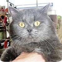 Adopt A Pet :: Percy - Pasadena, CA