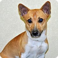 Adopt A Pet :: Trip - Port Washington, NY