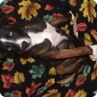 Adopt A Pet :: Sacajawea - Mechanicsburg, PA