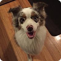 Adopt A Pet :: Max - Elk River, MN