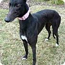 Adopt A Pet :: Millie Moo