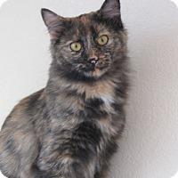 Adopt A Pet :: Bluebell - Ridgway, CO