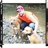 Adopt A Pet :: Daisy Mae! - Grafton, OH