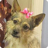 Adopt A Pet :: Phoebe Am I not cute enough? - Hagerstown, MD