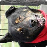 Adopt A Pet :: Hank - Vacaville, CA