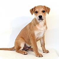Adopt A Pet :: Buzz - Needs Foster - Bloomington, MN
