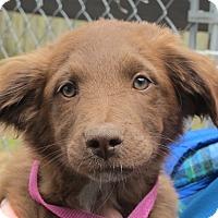 Adopt A Pet :: Mikey - Allentown, PA