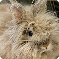 Adopt A Pet :: BELLE - Boston, MA