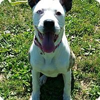 Adopt A Pet :: Buttercup - Lisbon, OH
