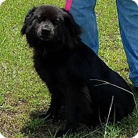 Adopt A Pet :: Haley - Rockville, MD