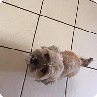 Adopt A Pet :: Roxie - Naples, FL