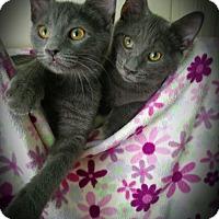 Adopt A Pet :: NoSox & Sketchers - Richmond, VA