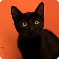 Adopt A Pet :: Ebony - Flushing, MI