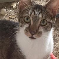 Adopt A Pet :: Kensington - McKinney, TX