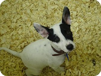 Terrier (Unknown Type, Medium) Mix Puppy for adoption in Cherry Hill, New Jersey - Jenny