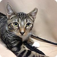 Adopt A Pet :: Polly - Oyster Bay, NY