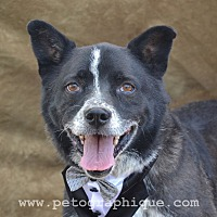 Adopt A Pet :: Conner - Las Vegas, NV