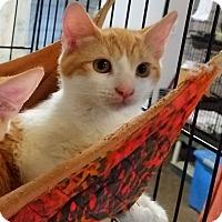 Adopt A Pet :: Rascal - Fallbrook, CA