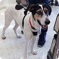 Adopt A Pet :: Pickles/Picard - Hillside, IL